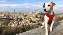 Pipper el perro viajero
