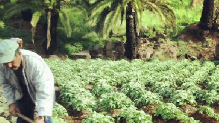 Agricultor trabajando en La Gomera