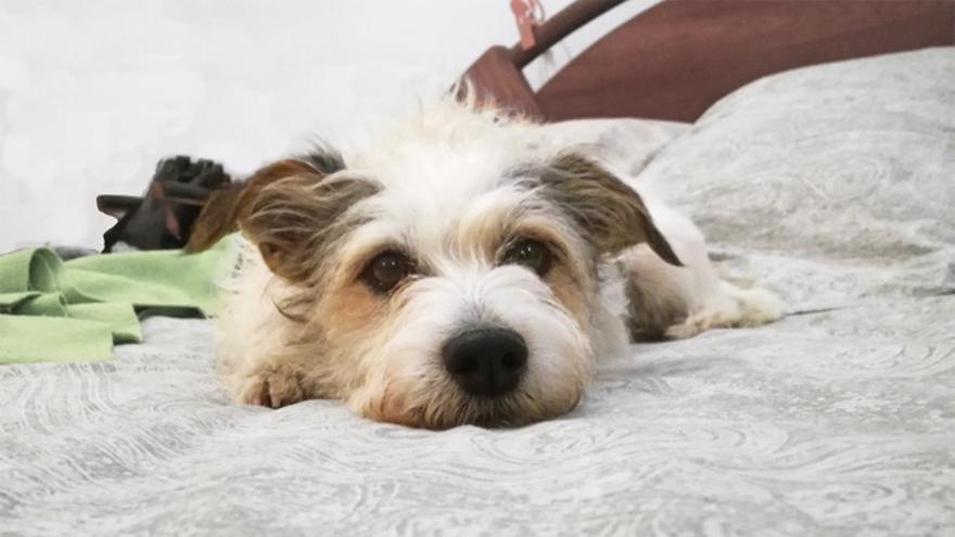 ¿Es bueno que el perro duerma en tu cama?