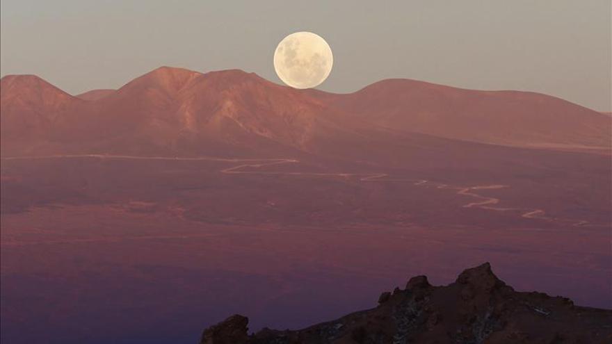 El desierto florido de Atacama, la otra cara de la catástrofe chilena