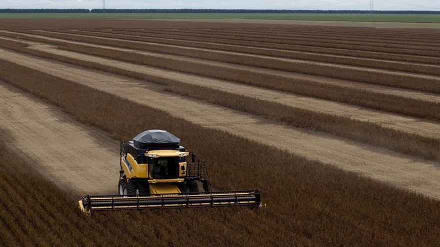 De acuerdo con el Ibge, la producción de soja, maíz y arroz, los tres principales cultivos del país, representarán el 93,1 % de toda la producción agrícola de este año y responderán por el 87,3 % del área total que será cosechada.