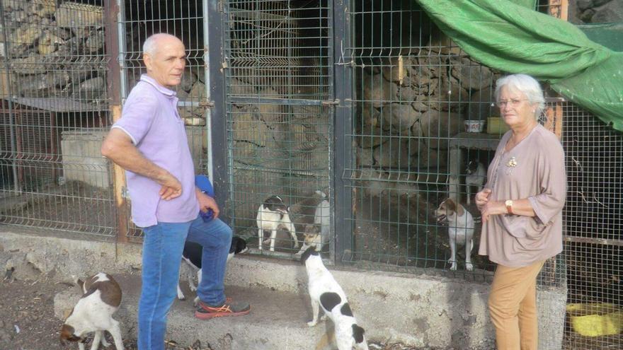 María Victoria Hernández indica que solo en la zona de Las Manchas han nacido ya cerca de 200 ejemplares de perro ratonero, con un censo en toda Canarias que ronda los 300.