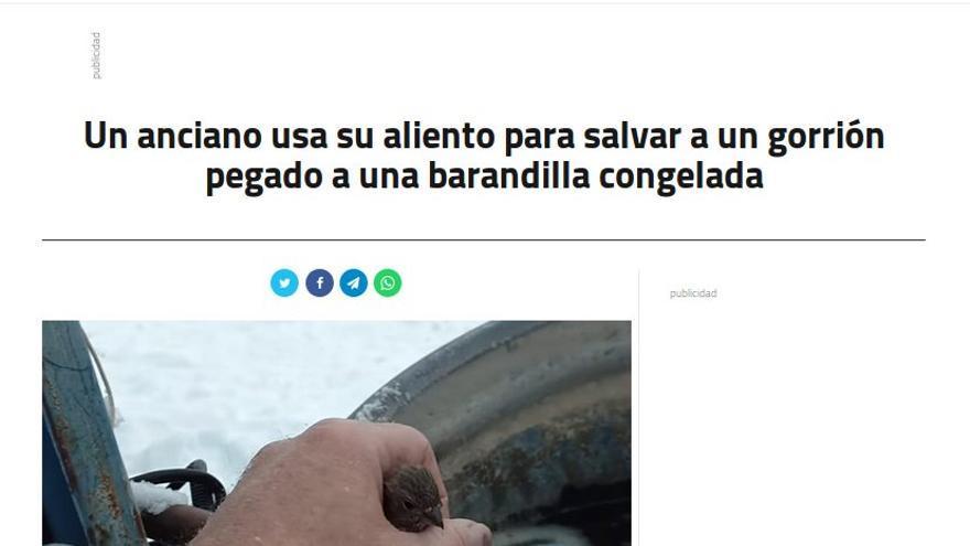 """""""Un anciano usa su aliento para salvar un gorrión"""""""