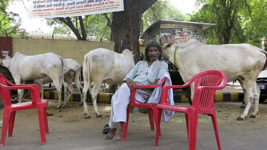 Hindúes radicales en pie de guerra contra los matarifes de la vaca sagrada