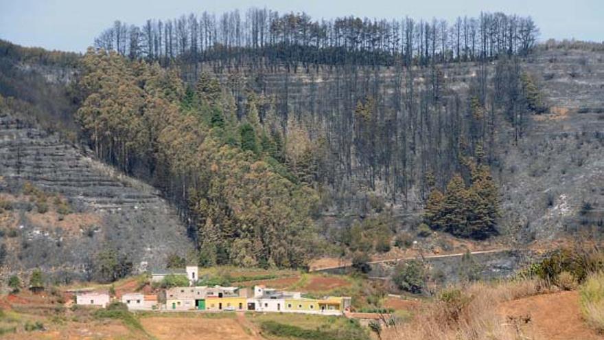Del incendio en Tenerife #9