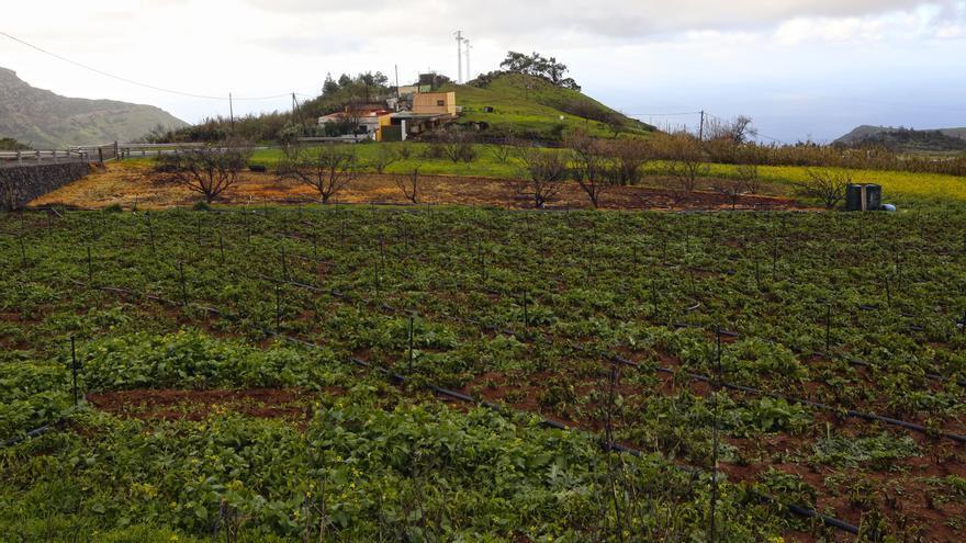Las lluvias de Filomena, una bendición para el campo canario
