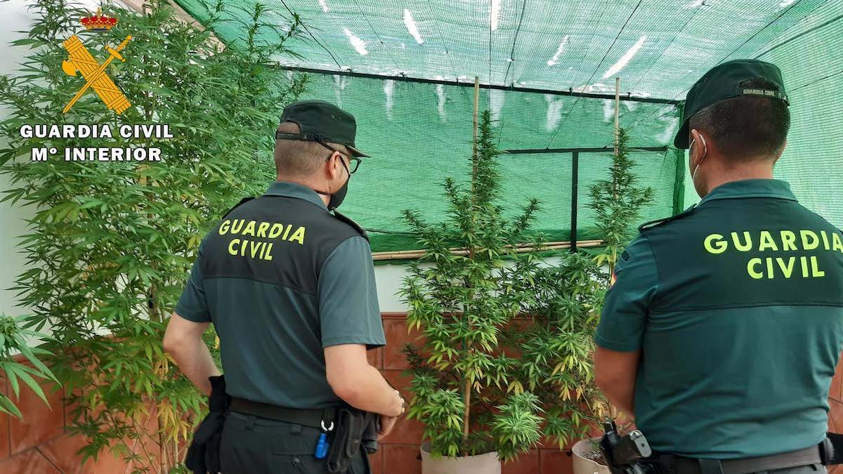 Los agentes, en la plantación de La Rambla.