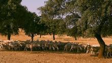 Castilla-La Mancha adelanta las ayudas a los ganaderos y anuncia una plataforma de venta directa al consumidor
