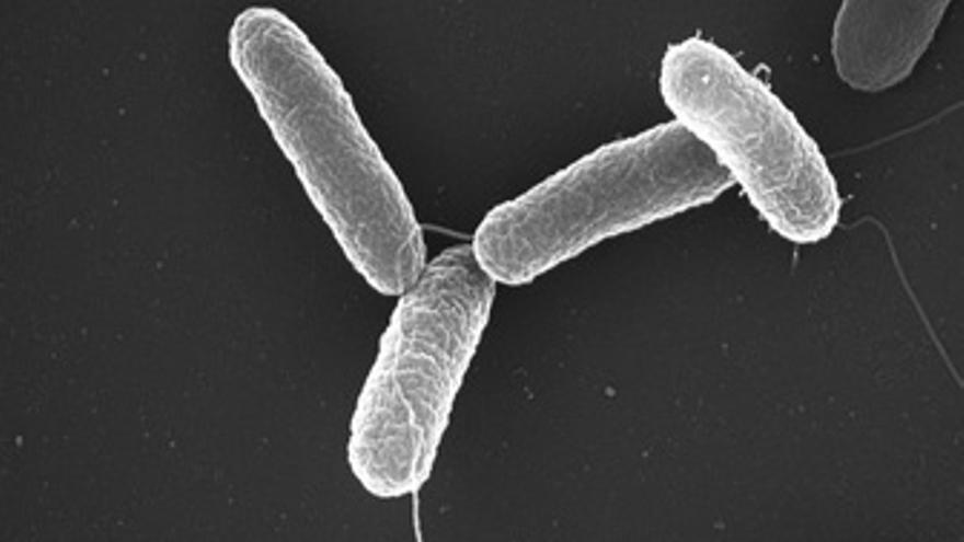 Bacteria salmonela. (EUROPA PRESS)