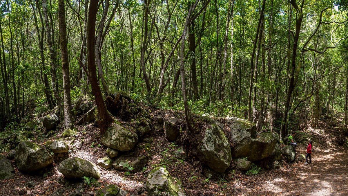 Parque Natural de Teno, en Tenerife