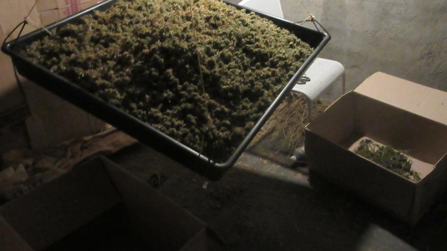 Localizada una plantación de marihuana en un caserío de Derio y arrestado el dueño por una orden de ingreso en prisión
