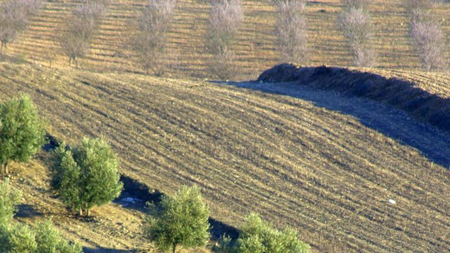 """El cuidado del suelo, un """"componente clave"""" para la conservación del agua"""