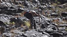 En la imagen, un biólogo del Parque Nacional arrancando una planta juvenil de Pennisetum en la parte baja del Lomo de Tenerra. (Foto: ÁNGEL PALOMARES)