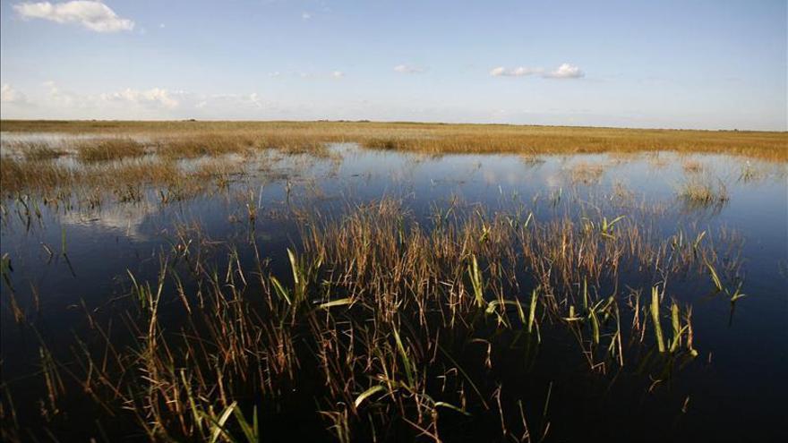 El cambio climático causa la expansión de los manglares en Florida