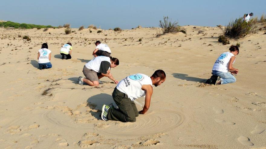 Voluntarios de SEO/BirdLife recogen perdigones de caza en Doñana.