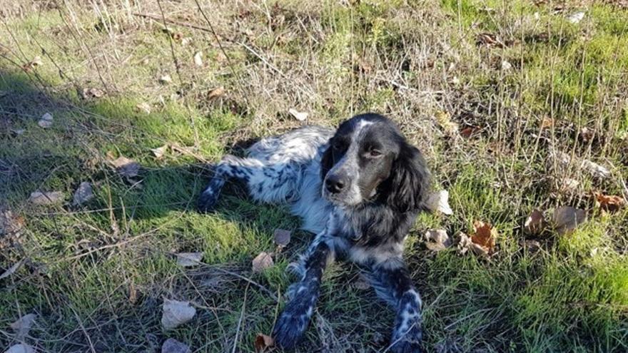 Nor, un cachorro de diez meses rescatado en Logroño por la protectora Ocho Vidas, murió tras la ansiedad sufrida a causa de la explosión de petardos durante la Nochevieja de 2017.