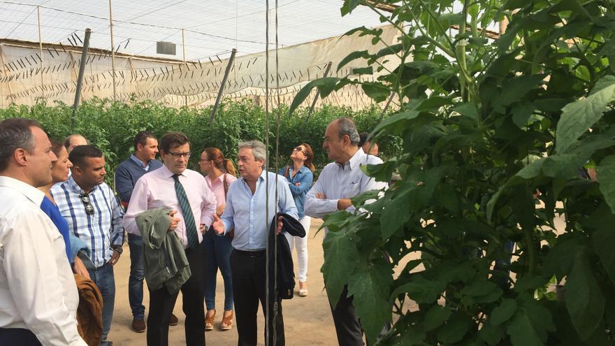 Visita a una explotación tomatera radicada en el sur de Tenerife