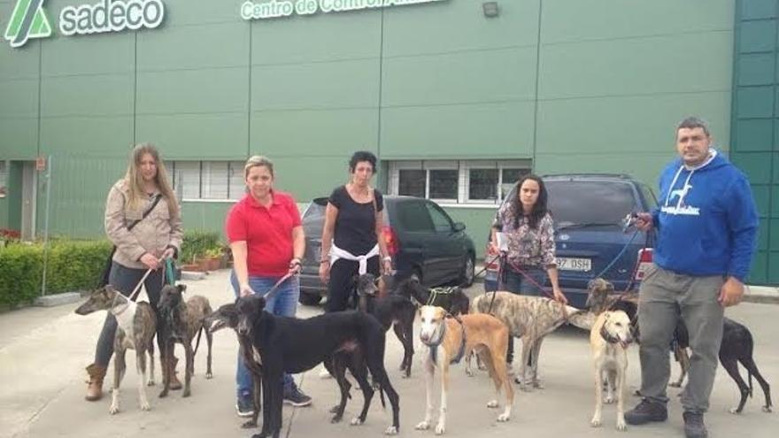 La Asociación Galgos del Sur rescata a once galgos de la perrera