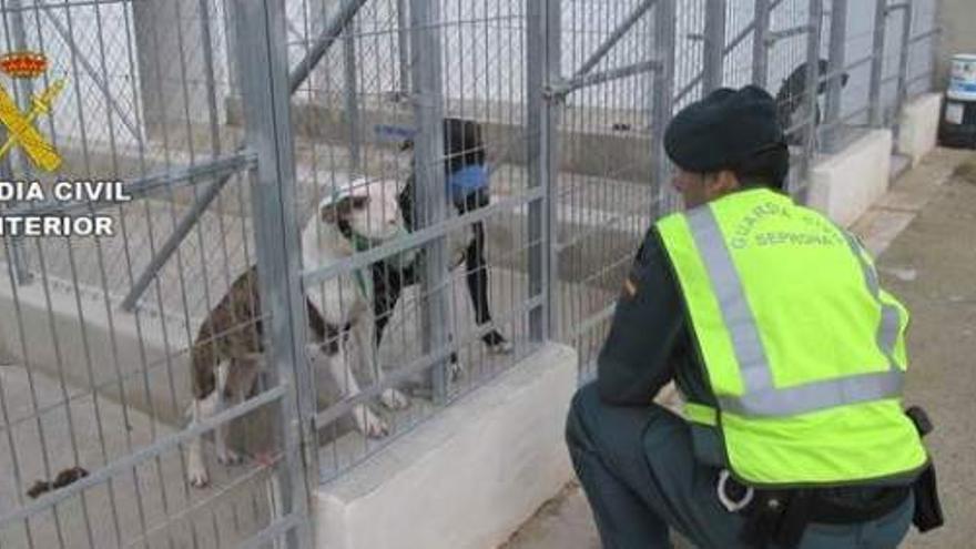 Un agente de la Guardia Civil junto a dos de los perros atacantes