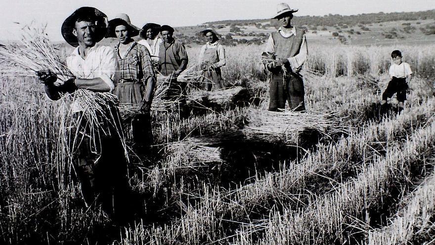 Imagen de varios jornaleros trabajando en el campo