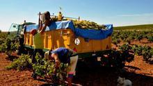 CCOO ve inadmisible que no se haya aprobado la reducción de peonadas para el subsidio agrario