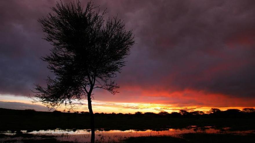 Alerta en el este de África por la falta de lluvias y el aumento del hambre
