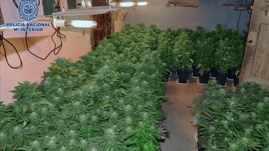 Detienen en Madrid al propietario de una plantación de marihuana en Olèrdola