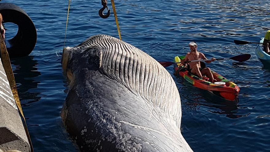 En la imagen, la ballena en el momento en que es sacada del agua, este martes, en el puerto de Santa Cruz de La Palma.  Foto: LUZ RODRÍGUEZ.