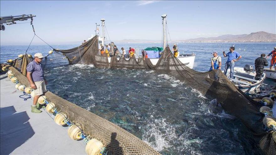 El atún rojo es más pequeño de lo esperado, según un estudio