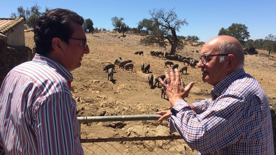 """El PP destaca que el Gobierno """"ha garantizado el 30% de las ayudas de la PAC para el campo andaluz"""""""