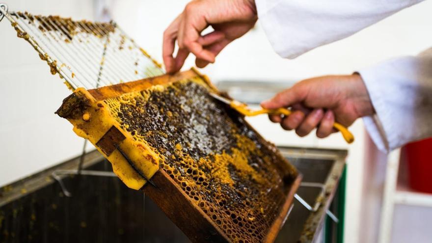 El apicultor Víctor Muñiz muestra sus colmenas ubicadas en Castromonte (Valladolid), cuya miel ha sido galardonada con la categoría de Oro en el certamen internacional de miel de Londres. EFE/Adrián Arias