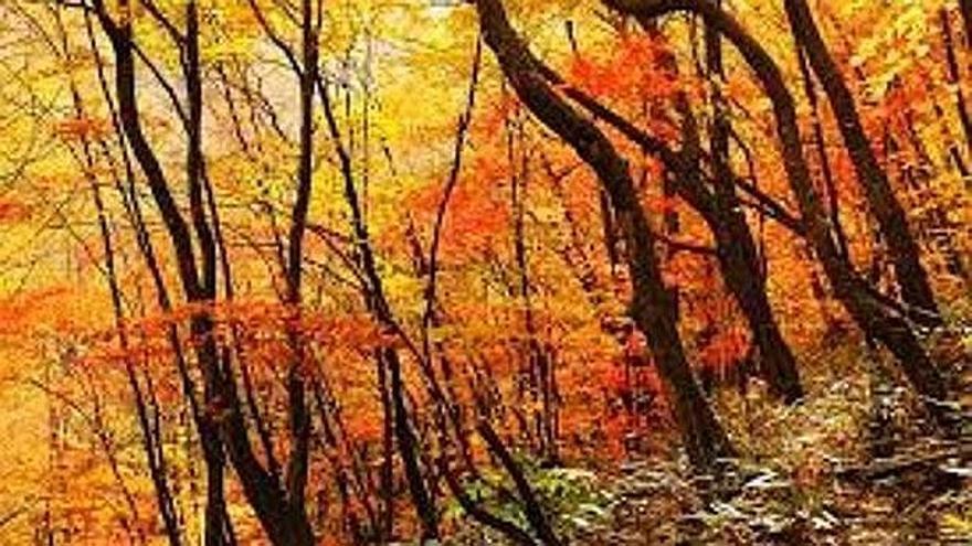 Bosque de la Sierra de Aralar, en otoño