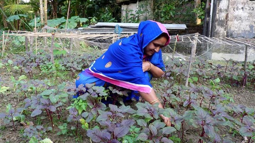 Los alimentos contaminados en Bangladesh, una fuente de enfermedad remediable
