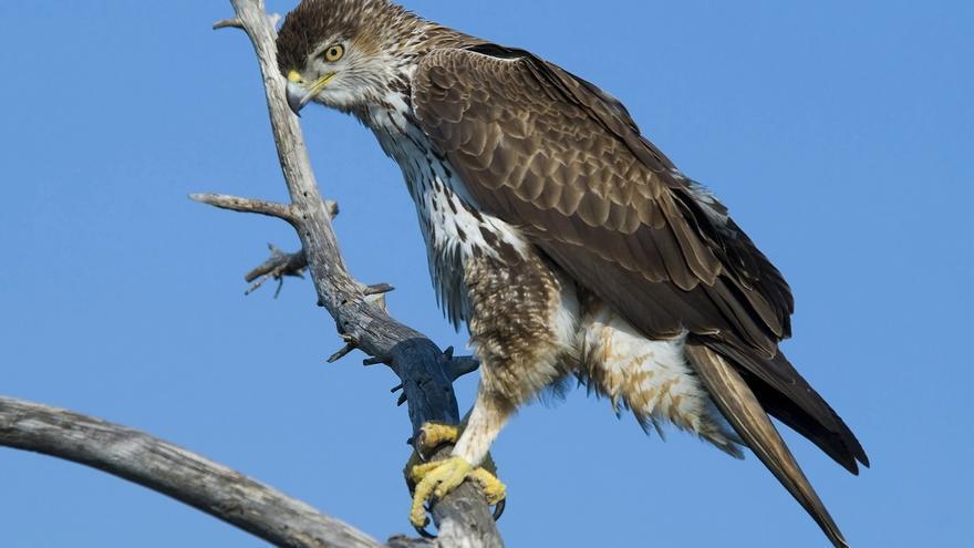 Málaga lleva su oferta de turismo ornitológico a la mayor feria especializada del mundo