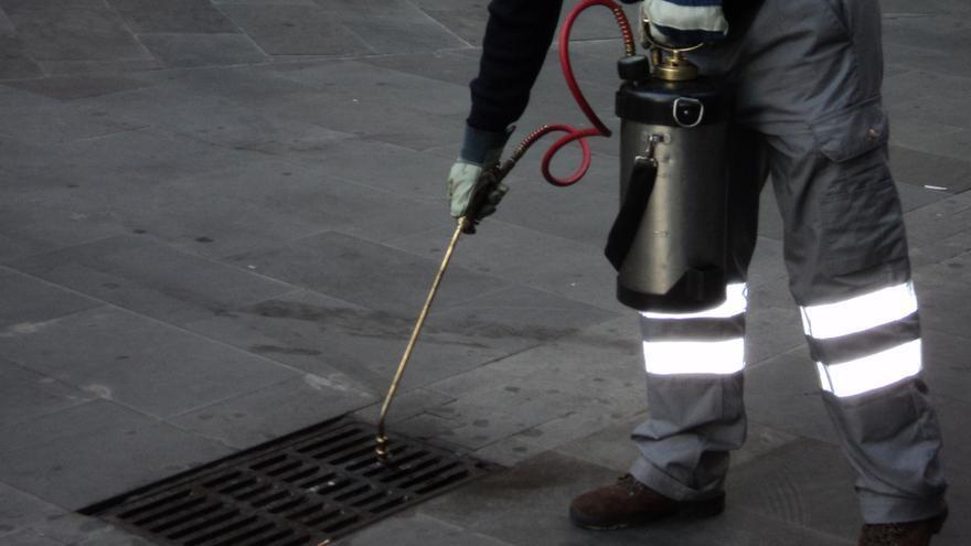 Salud Pública realiza tratamientos y controles de plagas en una treintena de barrios de Las Palmas de Gran Canaria
