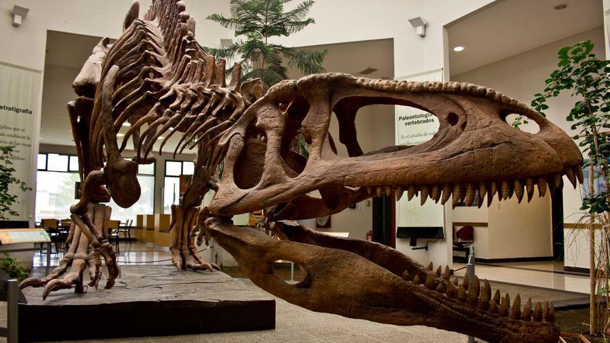 Fósil de un dinosaurio carnívoro patagónico expuesto en el Museo Paleontológico Egidio Ferugio de Trelew.