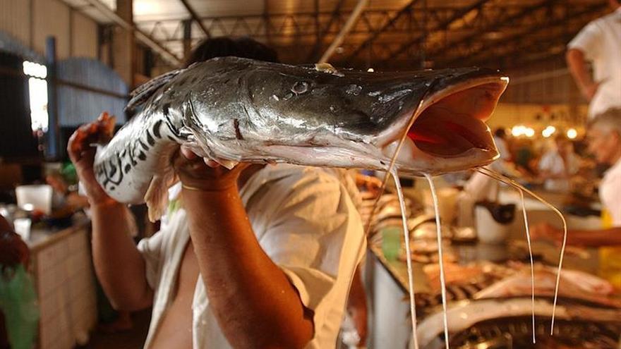 Brasil suspende las exportaciones de pescado a la Unión Europea tras veto sanitario