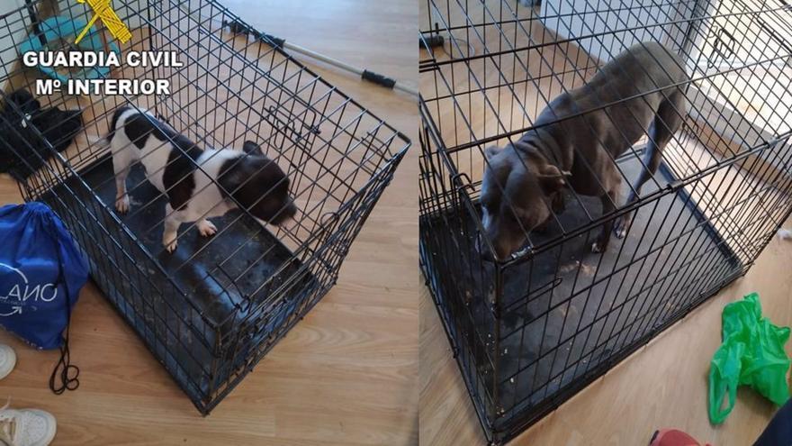 """Dos personas investigadas en Ocaña (Toledo) por tener a dos perros en """"pésimas"""" condiciones, entre suciedad, excrementos y orín"""