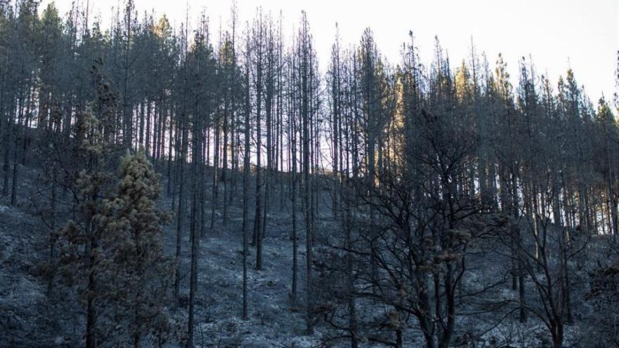 Zonas afectadas por el fuego del incendio forestal en el Barranco Los Pajaritos (Cueva Corcho).