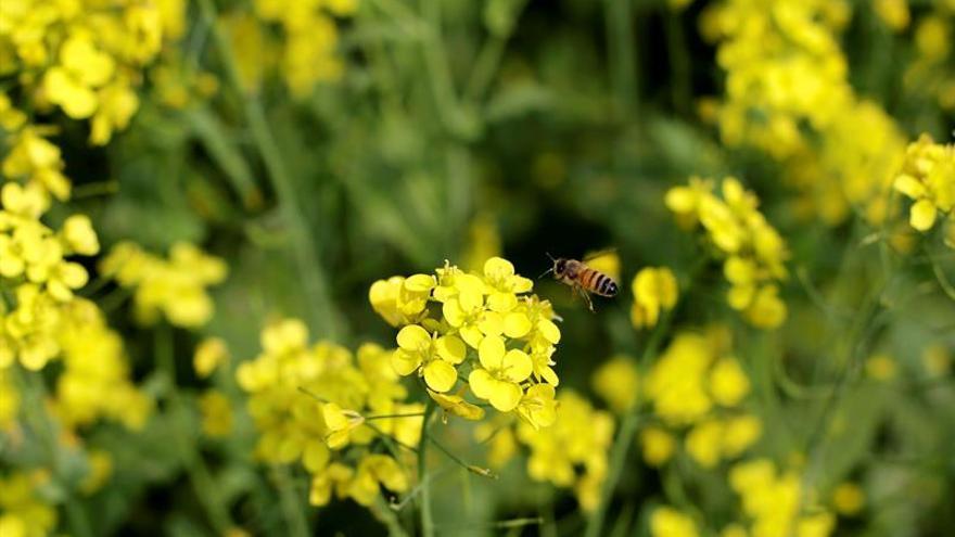 España, el país más beneficiado por las ayudas de la UE a la apicultura entre 2013 y 2015