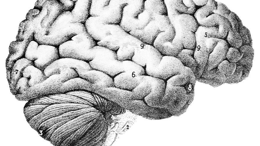 Pitts y McCulloch querían explicar el funcionamiento del cerebro de forma matemática