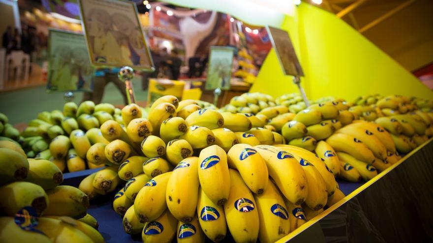 Manillas de plátano canario en un establecimiento de venta minorista