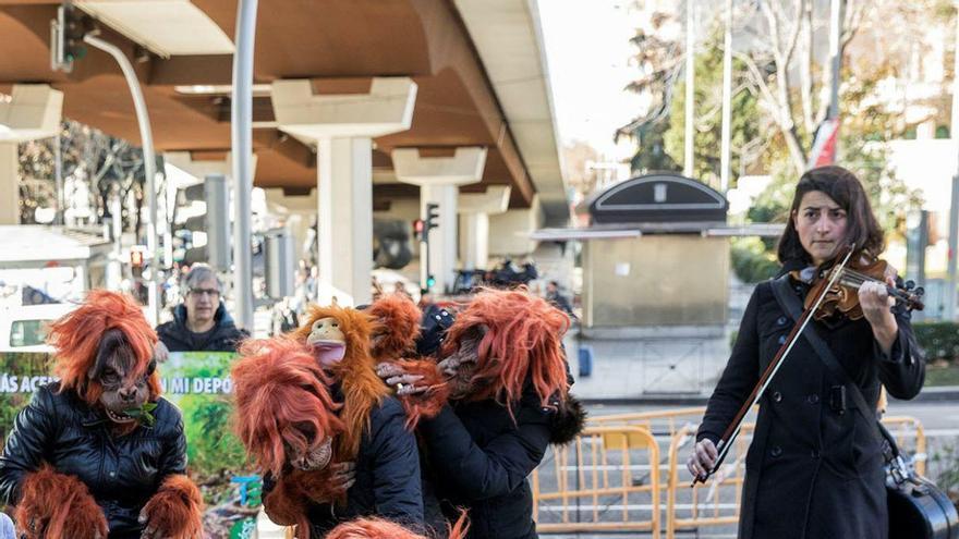 Orangutanes en Madrid
