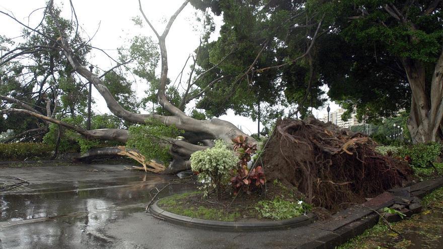 Árboles caídos en la avenida de Anaga, Tenerife, tras el paso de la tormenta tropical Delta