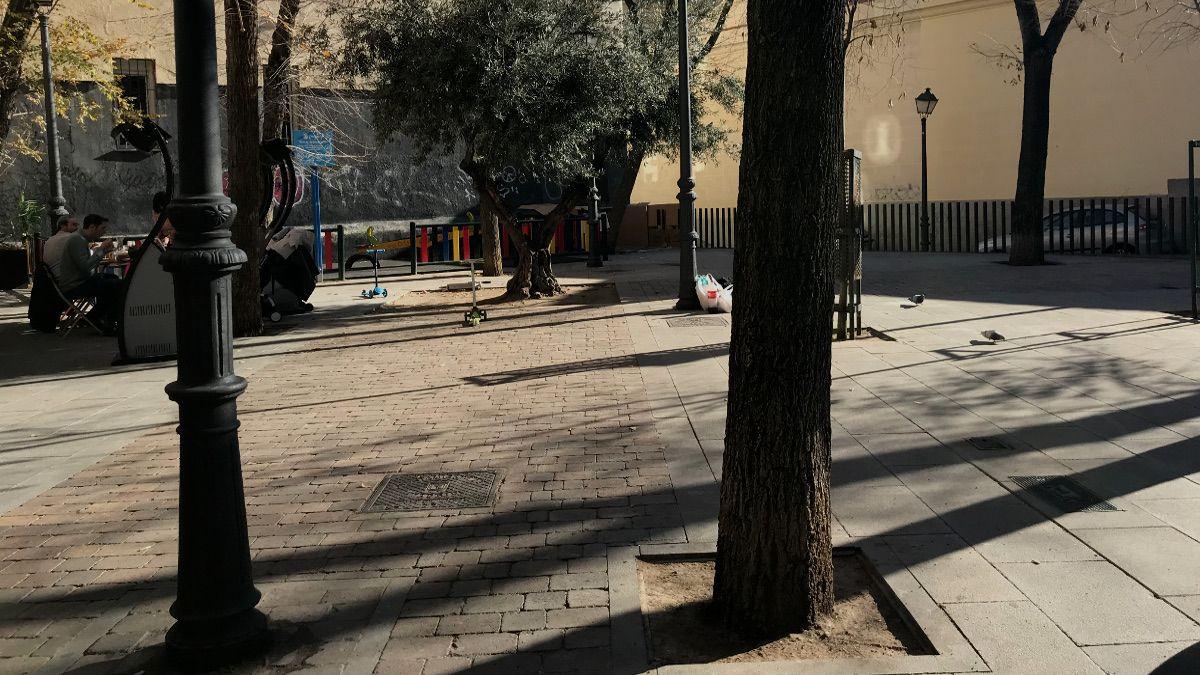 Árboles de la Plazuela de San Gregorio | SOMOS CHUECA