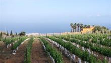 Canarias lidera el precio de exportación del vino en España en el primer semestre