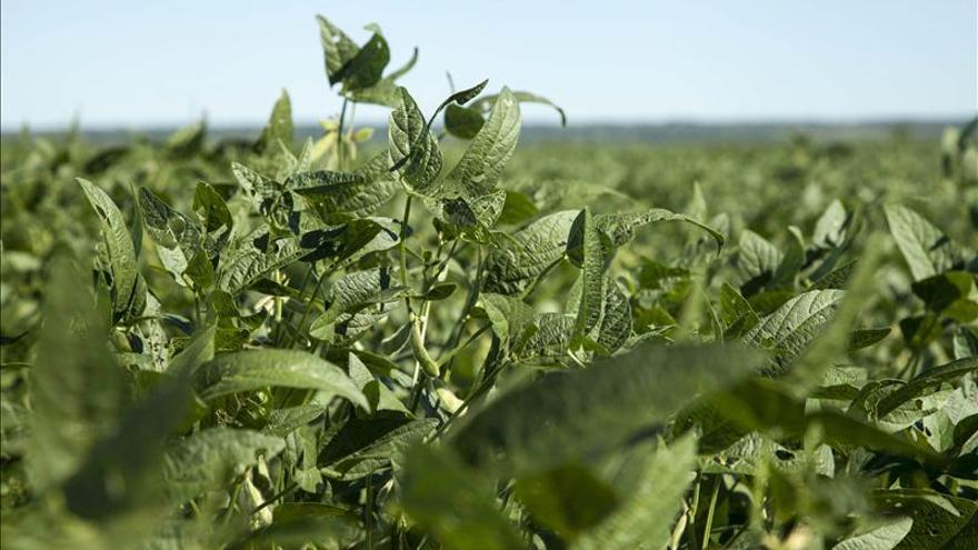 Técnicos de EE.UU. asesoran en Paraguay para expandir la soja en el seco Chaco