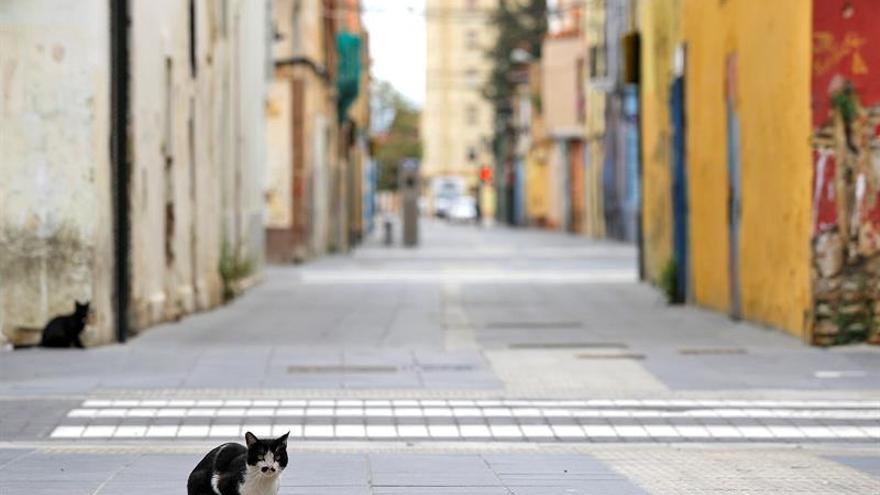 Dos gatos son las dos primeras mascotas que dan positivo de COVID-19 en EE.UU.