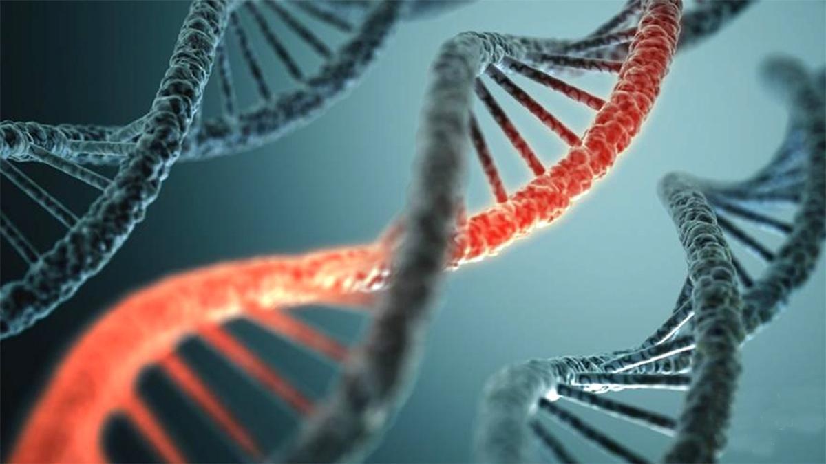 El mapa genético del país permitirá potenciar la investigación biomédica.