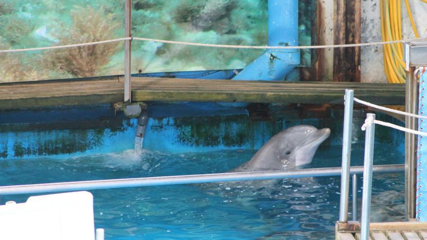 Delfines en el zoo de Barcelona